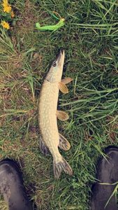 Northern Pike — Maxence Lemaire