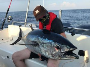 Bluefin Tuna — Jocelyn Dreneau