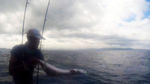Garfish — Tynilla Fishing