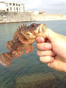 Brown Scorpionfish — stan leki