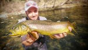 Brown Trout — Mick spool