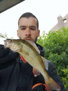 European Perch — Nicolas fishing59