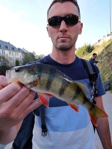 European Perch — Nicolas Rival