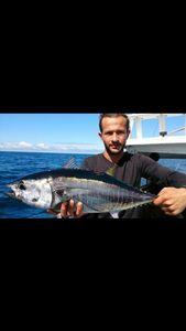 Bluefin Tuna — Julien Lapart