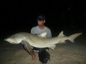 Requin Citron — Julien  DE LA VEGA