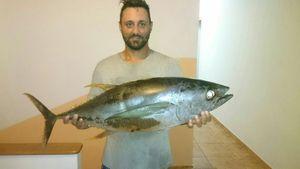 Yellowfin Tuna — GIORGIO  ANDRIEU