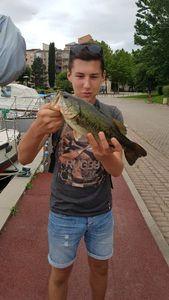 Largemouth Bass — Evan Contacolli