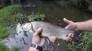 Chub — Julo Fishing