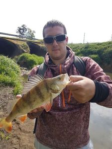 European Perch — Nicolas flyfishing