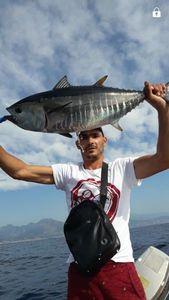Bluefin Tuna — Chris Lolo