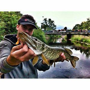 Northern Pike — Paul FishOndor