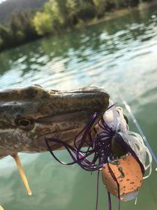 Northern Pike — mathieu pêcheur-cueilleur