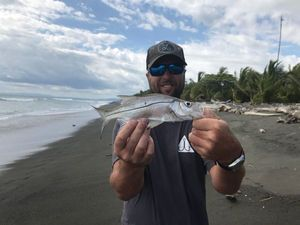 Pacific Snook — Olivier Leleu