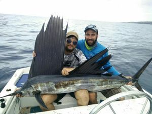 Pacific Sailfish — Guillaume Borie