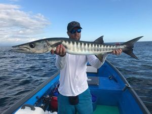 Great Barracuda — Olivier Leleu