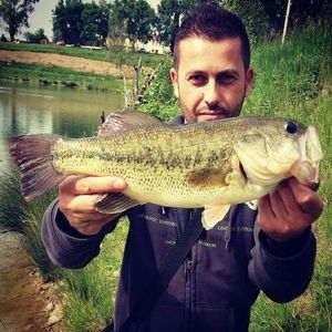 Largemouth Bass — Frank Ross