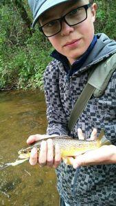 Brown Trout — Ryan  Braesch