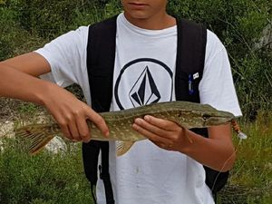 Northern Pike — Nathan Bres