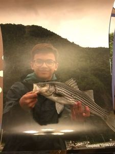 Striped Bass (Landlocked) — Nicolas Leminh