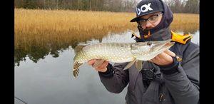 Northern Pike — Aminiakk Fishing