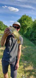 Largemouth Bass — Anthony Sellier