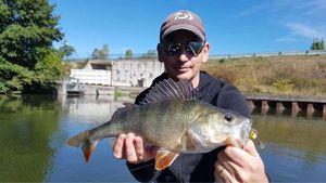 European Perch — Greg Teamtraillate