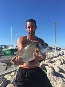 Gilthead Seabream — Julien Basquin