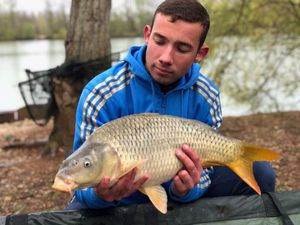 Common Carp — Corentin Allain
