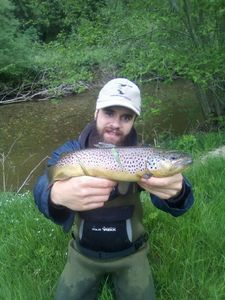 Brown Trout — Robin Grosselet--vernhes