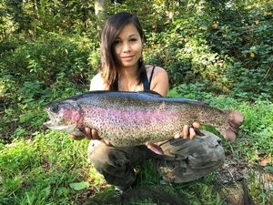 Rainbow Trout — Valérie Frehner