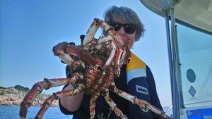 Araignée de Mer — Daniel Thomas