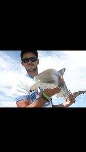 Requin Pointes Noires — Mathieu Dauchez