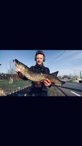 Northern Pike — Tom Verdonck