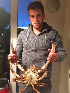 Common Spider Crab — Gauthier Coyette 🎣