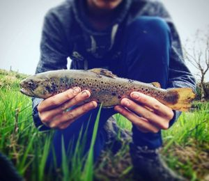 Brown Trout — Jeremy  Lepiller
