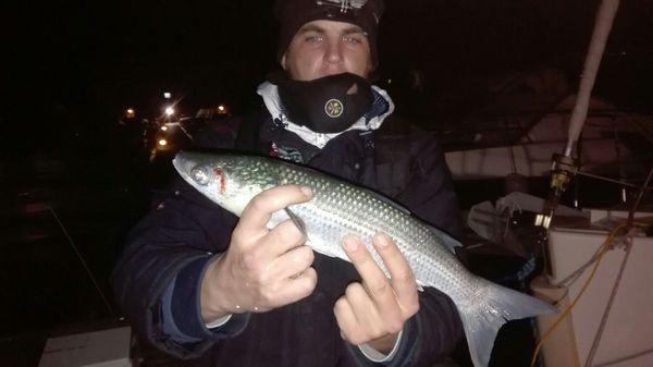 Thicklip Grey Mullet by Dark Fishing 66 | 0
