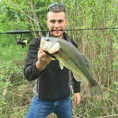 Largemouth Bass — Robin Des Bois