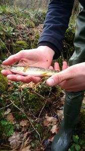 Brown Trout — Trouts Addict