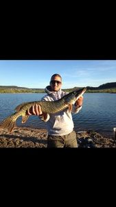 Northern Pike — Anthony Ls