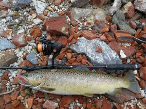 Brown Trout — Malma Dummies
