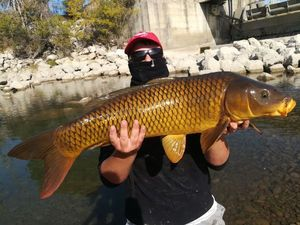 Common Carp — Lorenzo Fishing Treize