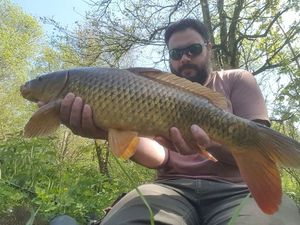 Common Carp — Thibault  Laurent