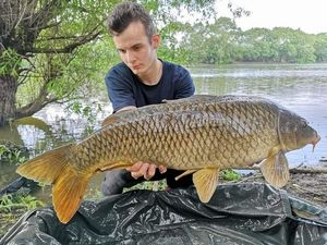 Common Carp — Lucas Ferron