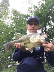Largemouth Bass — Quentin Ferres