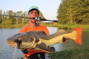 Redtail Catfish (Pirarara) — Nicolas Xmylife