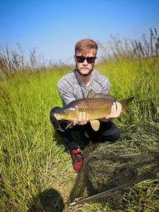 Common Carp — Scott Bouin