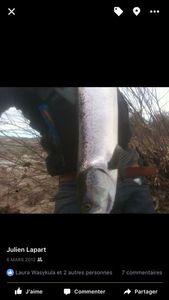 Atlantic Salmon (Landlocked) — Julien Lapart