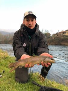 Brown Trout — Ludovic Pailhas
