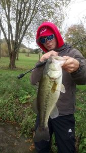 Largemouth Bass — Alexis Morscheidt