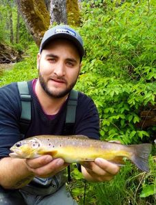 Brown Trout — Tomy Radet